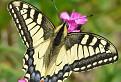 Motýlia rozmanitosť / 1.0000
