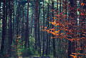 V lese / 1.0000
