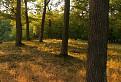 V lese nad Modrou / 1.0909