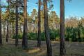 Borovicový les / 1.1250