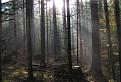 Starovodský les / 0.0000
