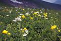 Neskorá jar na hrebeni / 1.1905
