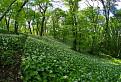 cesnakovy les I. / 1.0000