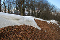 snehovo - listnaná hrebeňovka / 1.0455