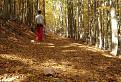 Cesta lesom / 1.7273