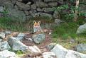 Líška Zamka.