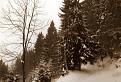 Zima sa vrátila do hôr. / bez hodnotenia