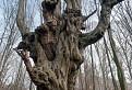 Horror strom / 1.0000
