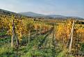 Jeseň vo vinohradoch / 1.0000