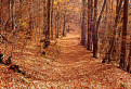 Jesenná cesta / 1.1000