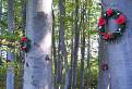 Pamätný les / 1.8000