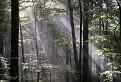Čarovný les / 1.0000
