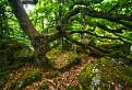 Ponický Dartmoor