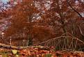 Jeseň pod Inovcom II / 1.3636