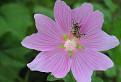 Včela / 1.5370