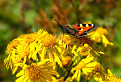 Spomienka na letných motýľov