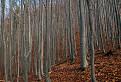 Les pod Strážovom / 1.0000