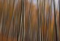 Malokarpatskym lesom / 1.3810