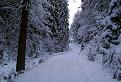 Zimná Medvedia cesta II. / 1.0000
