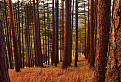 Lesom na Tlstú