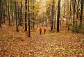V zlatom lese