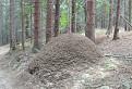 Mravenčia homola / 0.0000