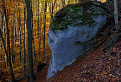 Obyčajný les -