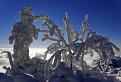 Zamrznutý... / 1.0286