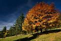 Ďalší jesenný strom II. / 1.0667