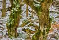 Lesní elfovia