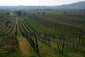 medzi vinicami / 1.0294