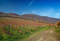 Orešanské vinohrady / 1.0400