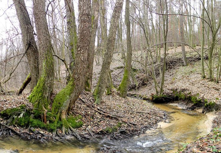 Pri Hradnom potoku v Hradnej doline