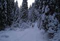 Zimná Medvedia cesta I. / 1.0000