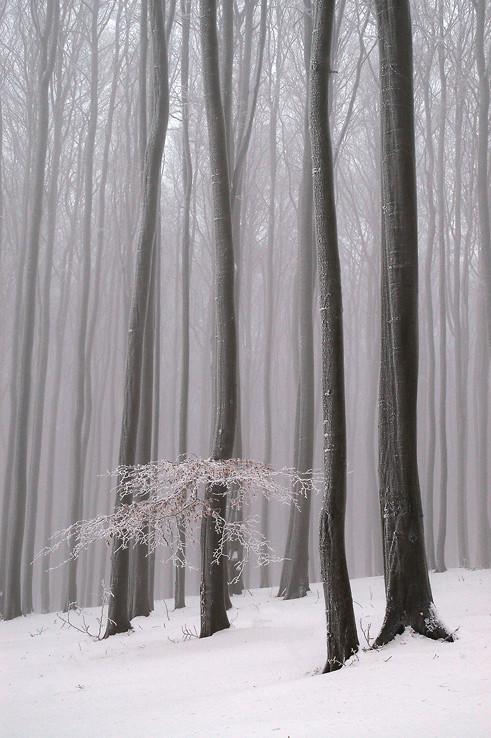 Zimné Karpaty