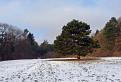 Zámocký park / 1.1429