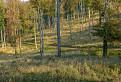 Lesná cesta / 1.0909