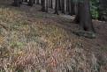 Na kraji lesa  / 2.4667