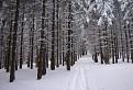 Snehovým lesom / 1.1000