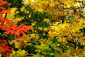 Jeseň na Plešivskej planine