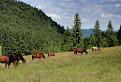 Kone pod Honzovským / 1.0476