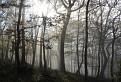 Čarovný les / 1.4500