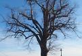 Strom s krížom