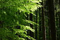 Zelené zlato