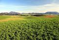 očami poľnohospodárov / 1.2632