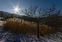 Zimné trávy / 1.0476
