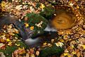 Malokarpatský jesenný / 1.0769