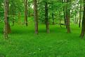 Zelený koberec / 1.0000
