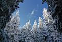 V zime v lese / 1.0714