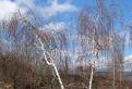 stromy / 2.6667